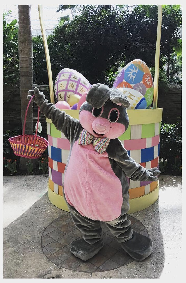 The Easter Bunny at Gaylord Palms is Kissimmee