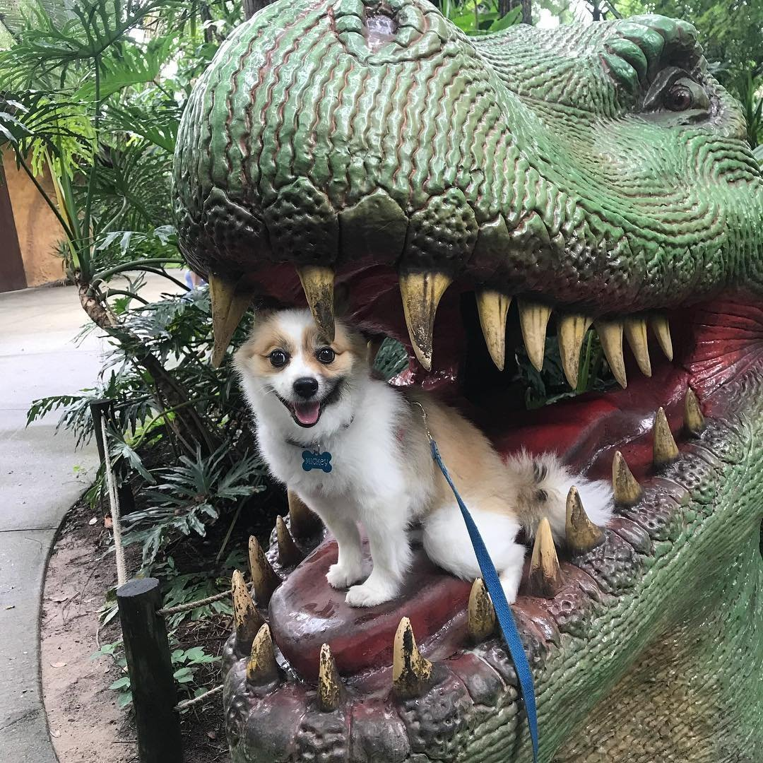 A small dog sitting in the mouth of a fake dinosaur.