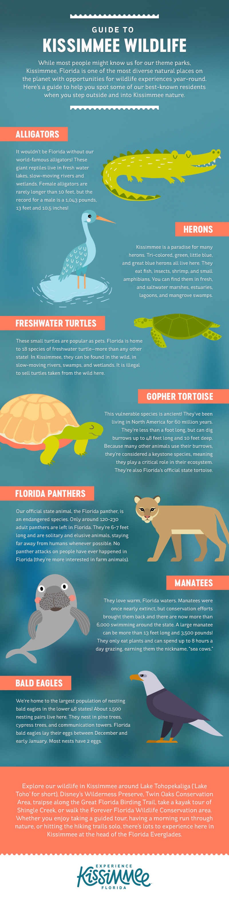 Guide to Kissimmee Wildlife Infographic