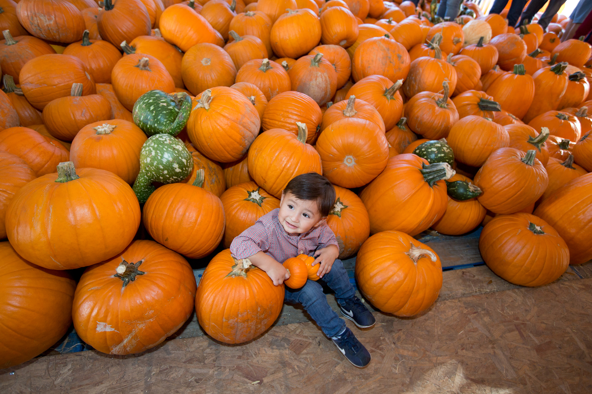 A little boy sits on a pile of pumpkins at a fall event in Kissimmee, Florida.