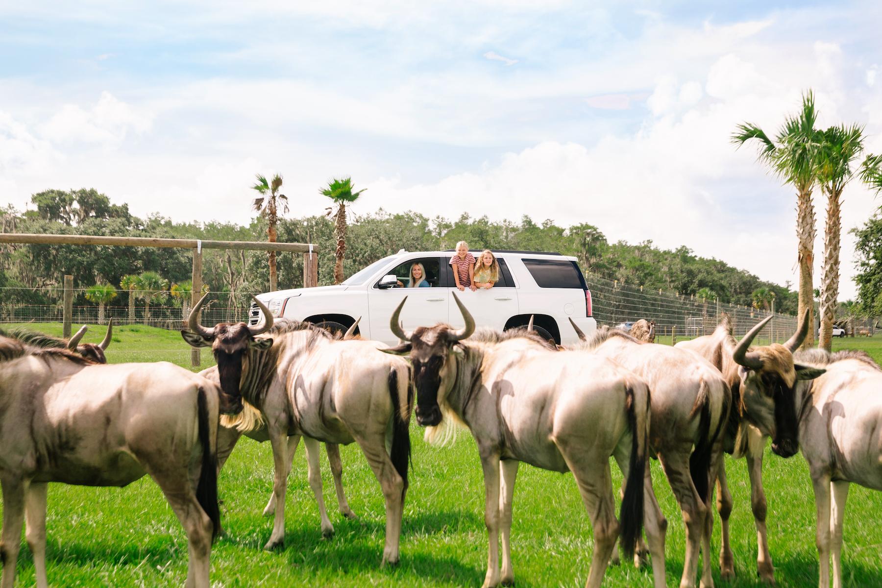 Safari Drive at Wild Florida