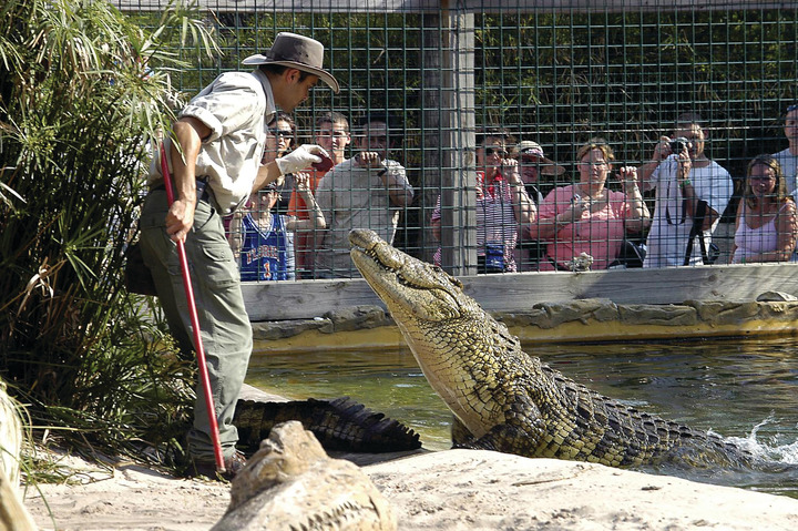 Feeding an alligator at Gatorland