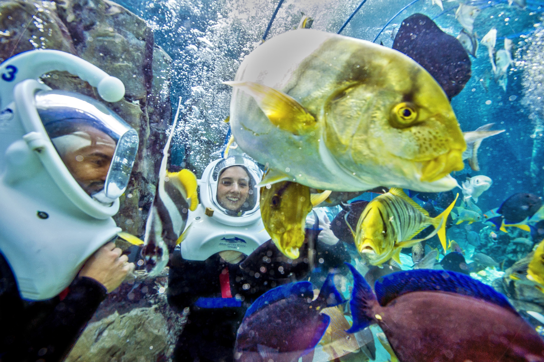 discovery cove experience kissimmee