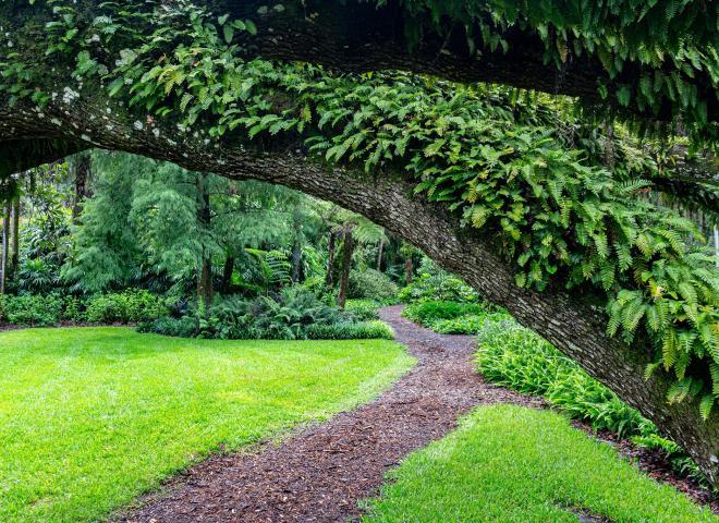 Lush green space around Bok Tower Gardens