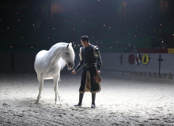 A night feeds his horse at Medieval Times Kissimmee