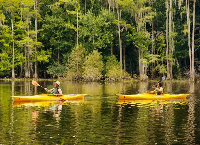 Two Guys Out Kayaking in Yellow Kayaks with Tree in Background