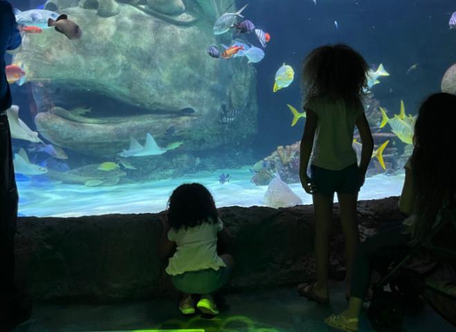 Dr. Laura's children enjoy the aquarium at SEA LIFE in Icon Park