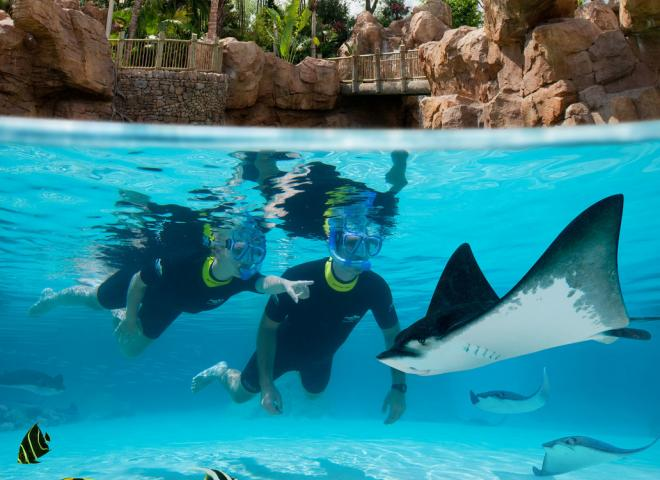 Two people snorkel at Discovery Cove