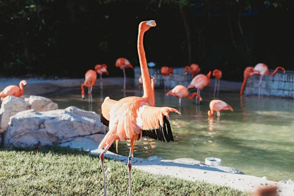 A flamboyance of flamingos at SeaWorld