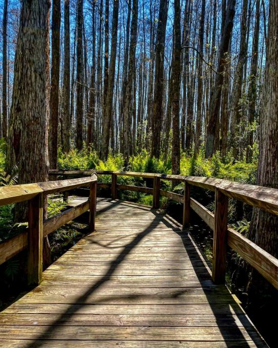 A boardwalk surrounded by trees in Kissimmee