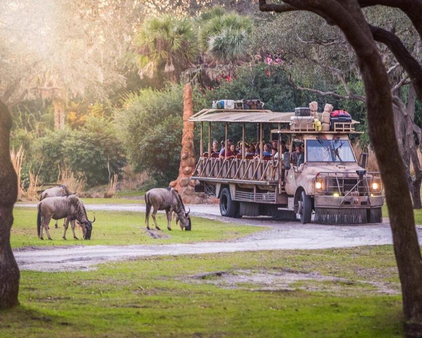 Guests on safari at Disney's Animal Kingdom Theme Park