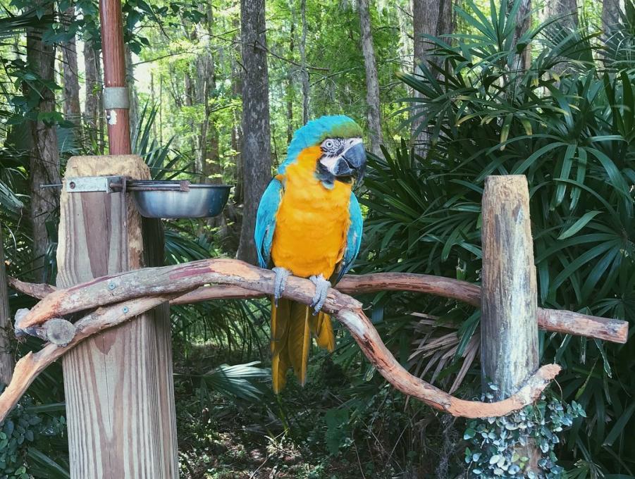 A colorful bird at Wild Florida