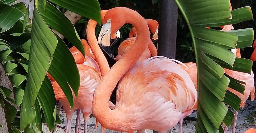 A flamingo through the trees in Kissimmee