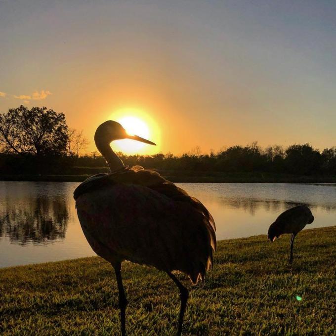 Silhouette of a bird near Lake Kissimmee