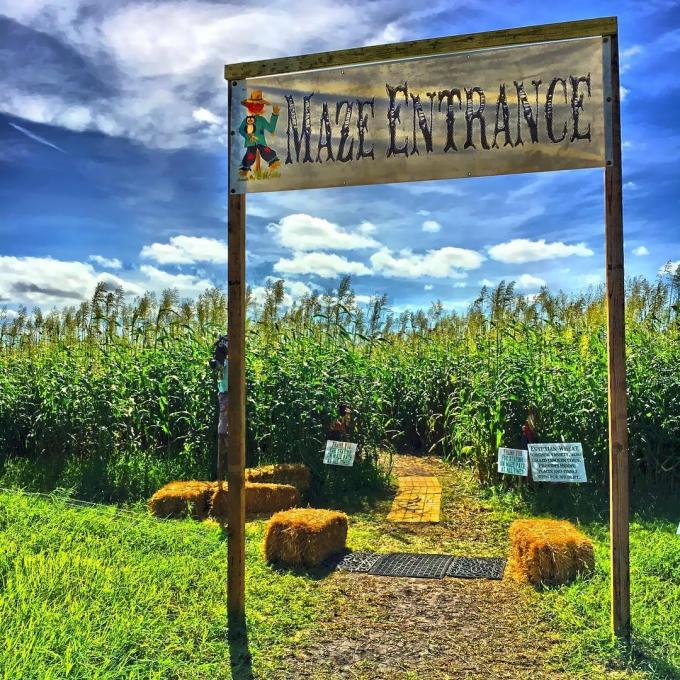 The entrance to the maze at Parton Ranch