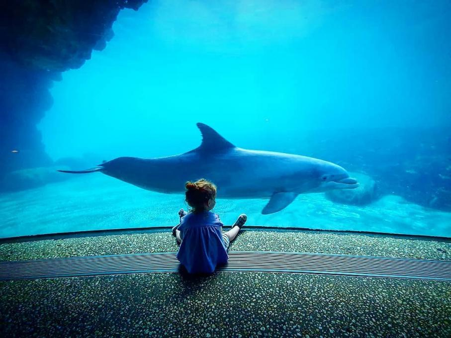 A little girls looks at a dolphin in SeaWorld Parks and Resorts Orlando