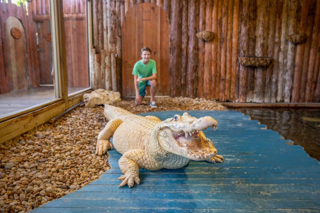 A boy with an albino gator at Gatorland