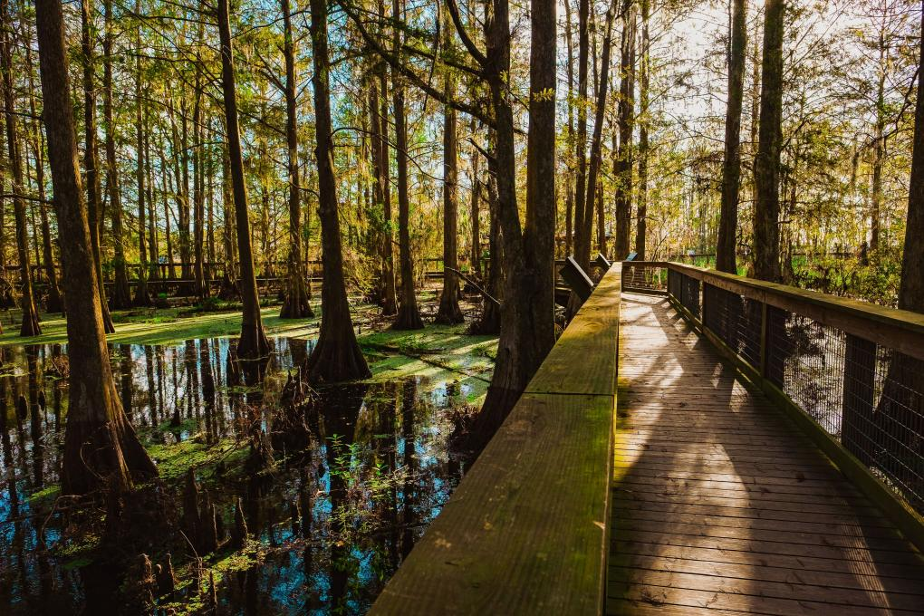 a wooden walkway over water at Gatorland, Kissimmee