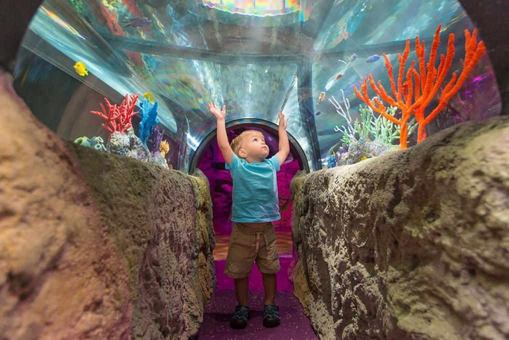 A Young Child Explores the Sea Life Aquarium