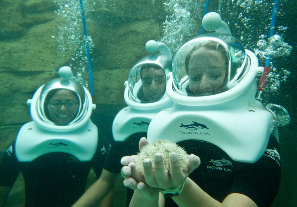 Three friends enjoy time underwater at Discovery Cove