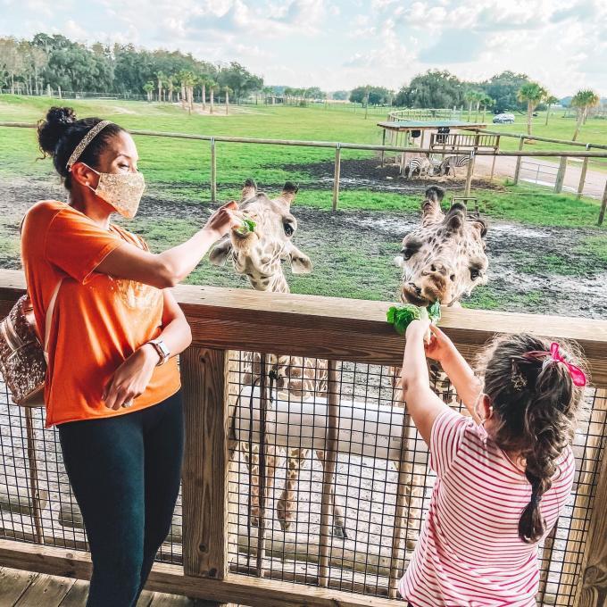 mother child feeding giraffes in a safari