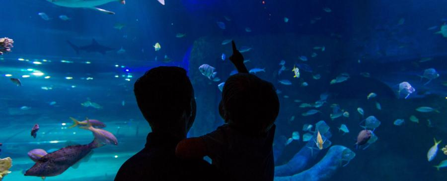 Atlantic Ocean at SEA LIFE Orlando Aquarium