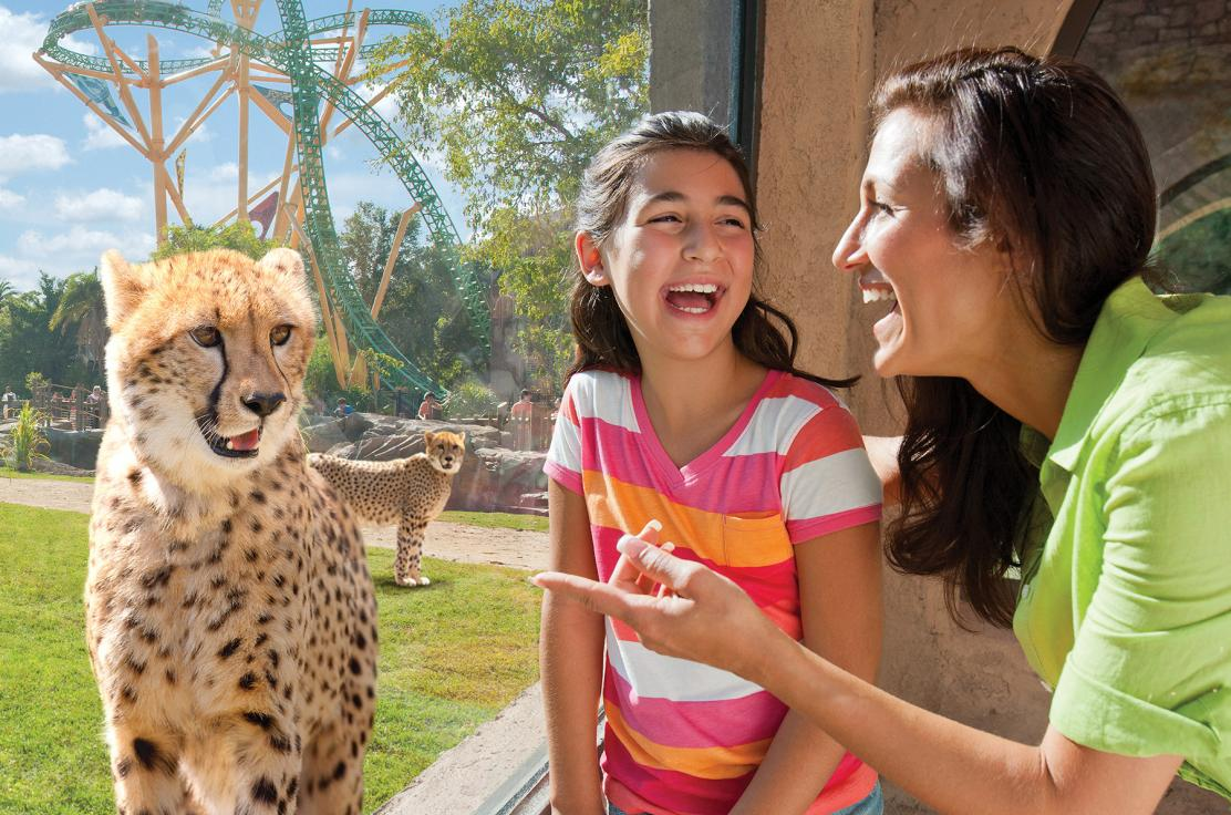 Family With Cheetah