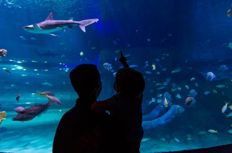 Atlantic Ocean at SEA LIFE Orlando Aquarium