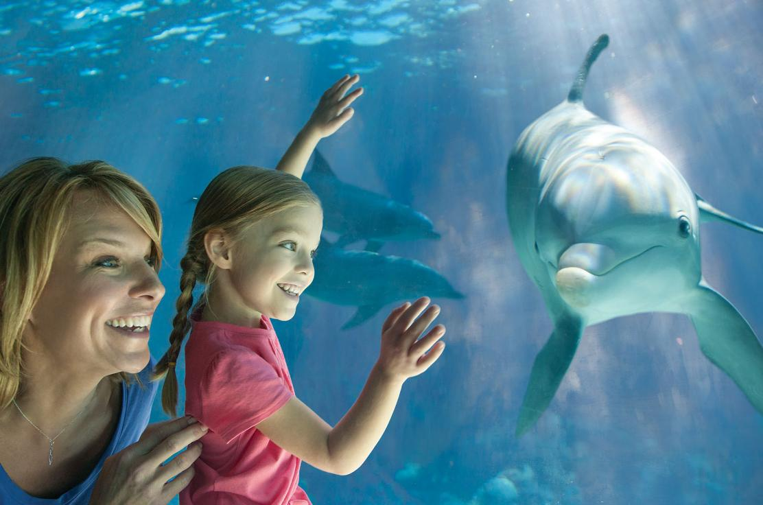 Dolphin Under Water With Mom & Girl