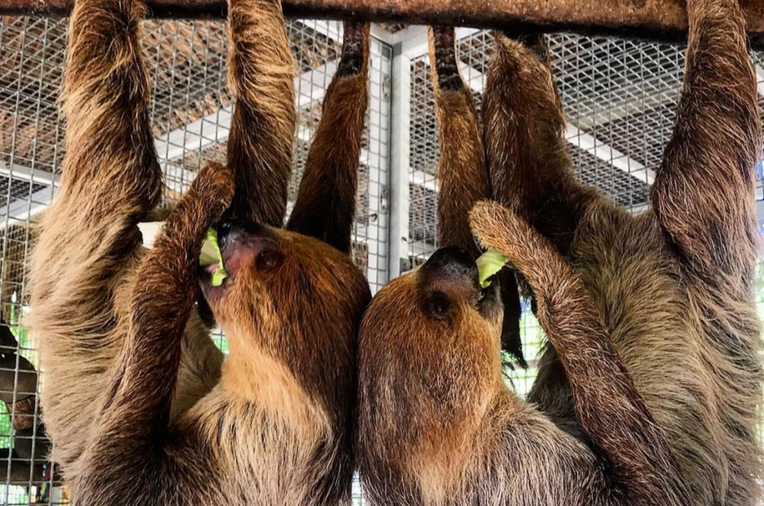 Guests can meet our sloths during a private tour
