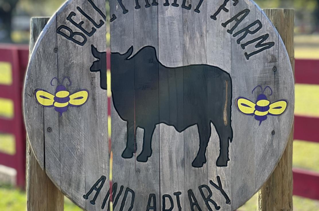 Our sweet, social and gentle goats