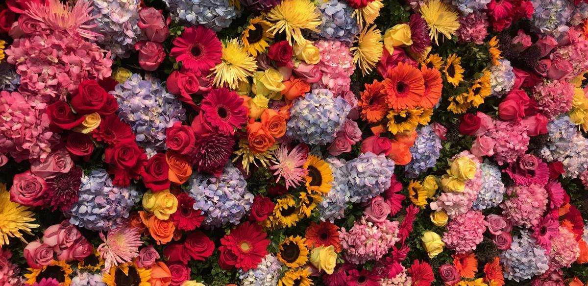 Top shot of flower beds at Epcot International Flower Garden