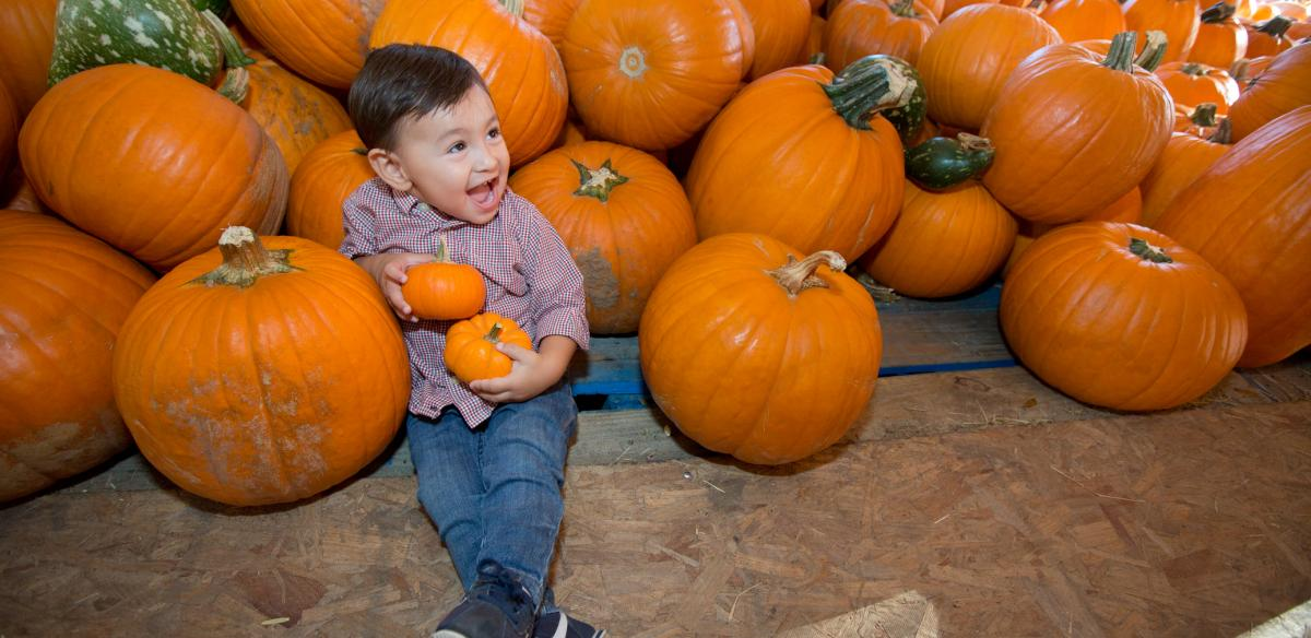 A child sitting in a pumpkin patch in Kissimmee, Florida