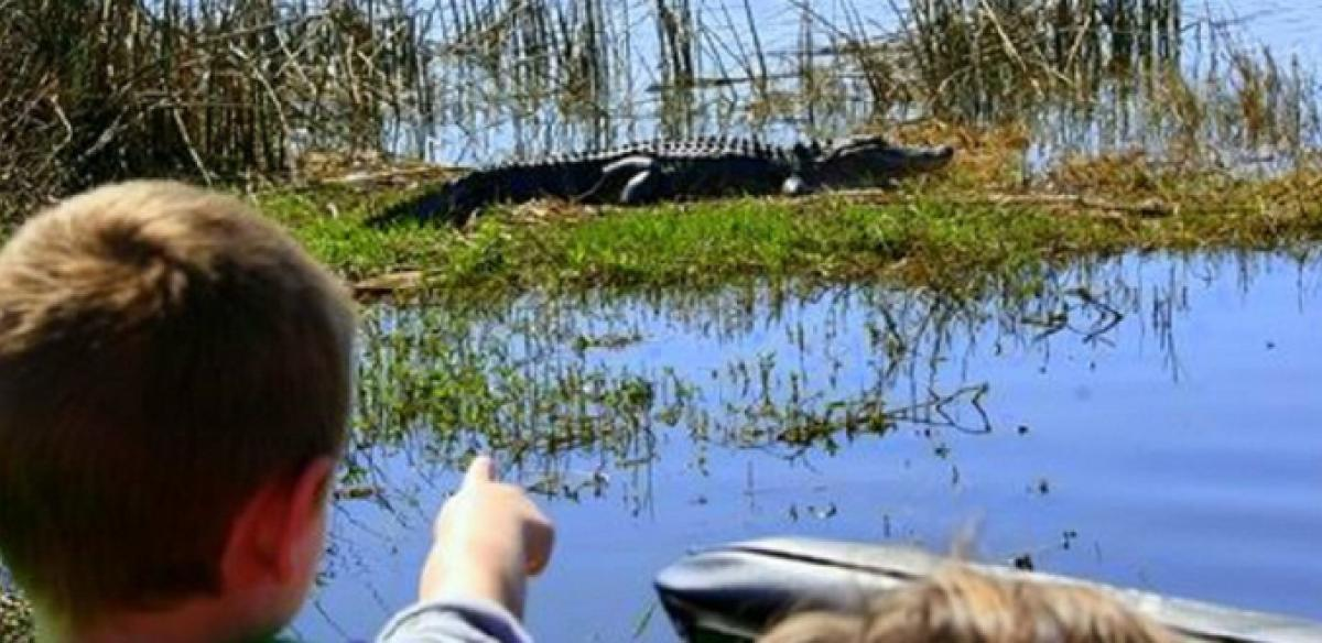 Young boy pointing at an alligator in a swamp in Kissimmee, Florida.