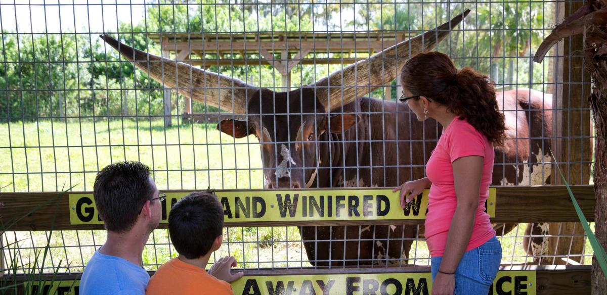 A mother and father with their son looking at an animal through a wired fence.