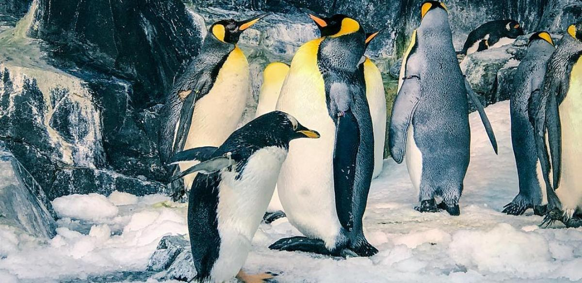 Penguins at SeaWorld Orlando by Instagram @laokmo